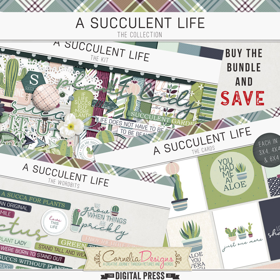 A SUCCULENT LIFE | COLLECTION