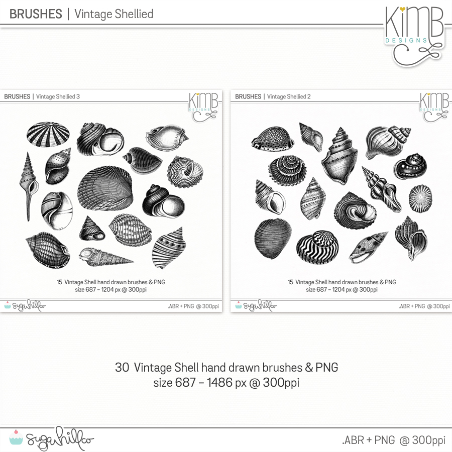 CU | Brushes : Vintage Shellied Collection